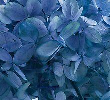 Blue, Blue Hydrangeas by Sandra Foster