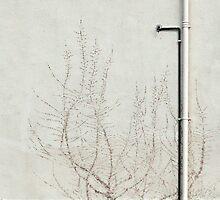 Ivy Print by Ian Mac
