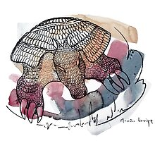Interpretation #27 - Armadillo by Ignacio Marino Larrique