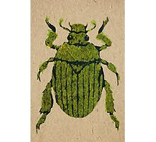 Christmas beetle 03 Photographic Print