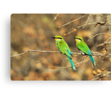 Bee-eater Greens - Mother and Chick of Spring Canvas Print