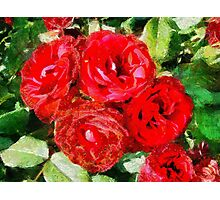 Red Roses Forever Photographic Print