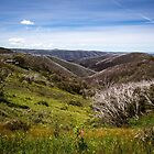 Summer on Hotham by WendyJC
