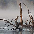 Great Blues in Fog by Denise Worden
