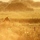 10.9.2014: Horse on Pasture at September Evening by Petri Volanen