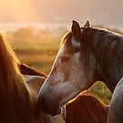 10.9.2014: Horses on Pasture at September Evening II by Petri Volanen
