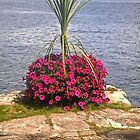 Flowers at Boldt Castle, New York, USA by Shulie1