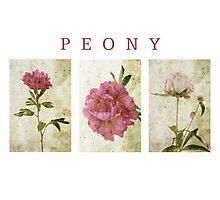 Peony Triptych Photographic Print