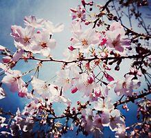 Cherry blossom by laifalove