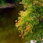 Signs of Autumn on the River by goddarb