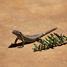 Interacting with wildlife - African Striped Skink by Maree  Clarkson