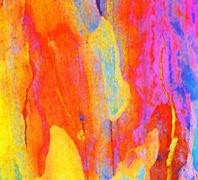 Summer Eucalypt Abstract 19 by Margaret Saheed