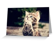 The pleading cat Greeting Card
