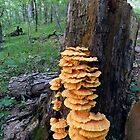 Yellow Shelf Mushrooms by Timothy  Ruf