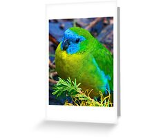 Turquoise Parrot Greeting Card