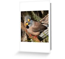 Long-tailed Finch Friends Greeting Card