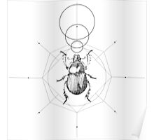 Dots, Lines & Beetle Poster