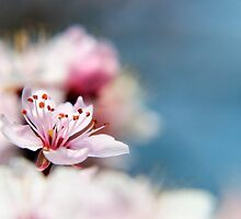 Blossom part 2 by AlexFHiemstra