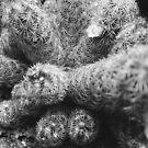 Cactus Species by tropicalsamuelv