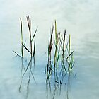 Water grass by shalisa