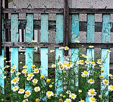 Fence and Flowers © by Ethna Gillespie