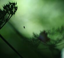 Spider Light - Muted Greens Through Vintage Lens by rennaisance