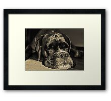 I see you...........  -Boxer Dogs Series- Framed Print