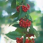 Autumn   by OlaG