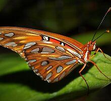 Gorgeous wings by ?? B. Randi Bailey