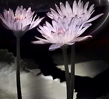 Lily and light by DerekEntwistle