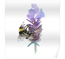 Bee on lavender watercolor Poster