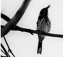 Hear Him Sing by Sandra Chung