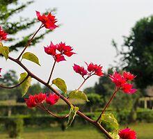 african flower by spetenfia