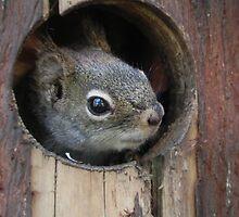 Did You Knock? by Martha Medford