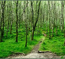 Path through the woods -Glendalough by dOlier