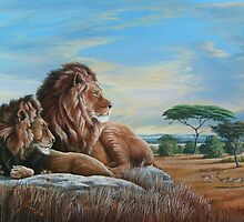 African Lions- The Two Bachelors by Daniel Butler