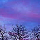 Tree Tops In The Sunset by Sandra Foster