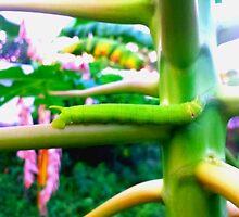 Green Papaya Caterpillar by peacesoftuesday