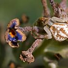 Crab Spider by Otto Danby II