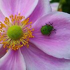 Green Shield Bug by lezvee