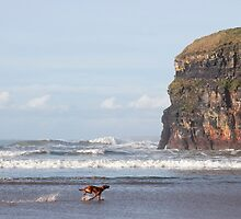 blur motion of dog running by cliffs by morrbyte