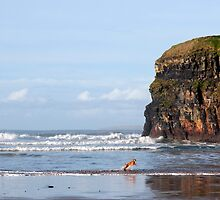 blur motion of dog running in sea by cliffs by morrbyte