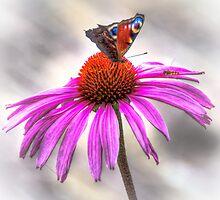 Butterfly by AlexFHiemstra