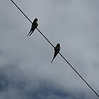 Birds On A Wire by MagsWilliamson