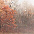 October Fog by April Koehler