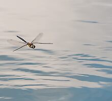 Hovering by David-J