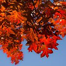 Happy Scarlet Autumn Patchwork by Georgia Mizuleva
