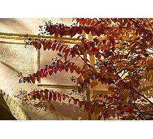 Dainty Branches - Warm Fall Colors - Washington, DC Facades Photographic Print