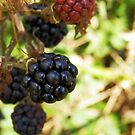 In abundance- Blackberries by sarnia2