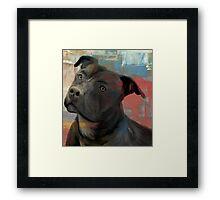 Pit Bull Piglet in Paint Framed Print